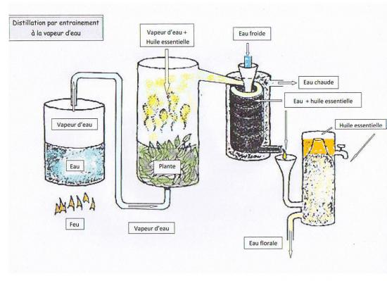 Schéma de la distillation d'huile essentielle